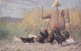 Chickens Poulets Oiseaux Geflügel  Scarecrow  Épouvantail  Leren Uitspreken  Old Cpa. - Vogels