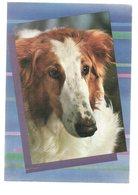 REF 378 : CPSM Chien Colley - Honden