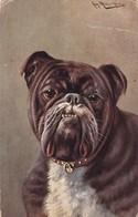 Chien Englisch Bulldog A.Müller  Old Cpa. 1910 - Honden