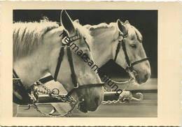 Pferde - Foto-AK Grossformat - Verlag Stöckel-Foto Nr. 319 - Paarden