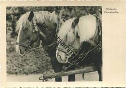 Pferde - Arbeits-Kameraden - Foto-AK Grossformat Wagener - Nattermüller-Verlag Hann. Münden - Paarden