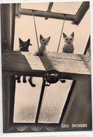 """(chats) Photo Noir Et Blanc  """"les Pauvres"""" Photo Albert Monier Ed LES AMIS DES CHATS (PPP19812)10 X 15 - Katten"""