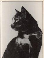 (chats) Photo Noir Et Blanc De Albert MAIGNE   Portraits De Chats N°10  Ed Le Coin Du Sac ,Samatan  (PPP19813) - Katten