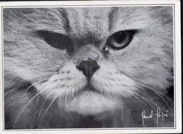 (chats) Photo Noir Et Blanc De Albert MAIGNE   Portraits De Chats N°4  Ed Le Coin Du Sac ,Samatan  (PPP19815) - Katten