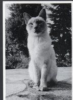 (chats) Photo Noir Et Blanc De Yvon Kervinio Ed L'Aventure Carto (tirage 100 Ex)  (PPP19817) - Katten