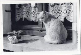 (chats) Photo Noir Et Blanc De Yvon Kervinio Ed L'Aventure Carto (tirage 150 Ex)  (PPP19818) - Katten