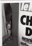 (chats) Photo Noir Et Blanc Golbin  Coll Chats N°8 (PPP19820) - Katten