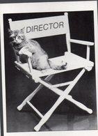 (chats) Photo Noir Et Blanc Ed HEROES LONDON (PPP19821) - Katten