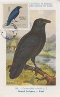 Carte  Maximum  1er  Jour   POLOGNE   Corbeau   1963 - Rebhühner & Wachteln