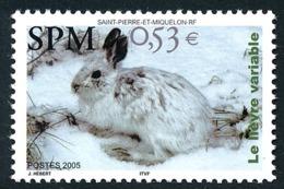 ST-PIERRE ET MIQUELON 2005 - Yv. 855 **   Faciale= 0,53 EUR - Faune. Lièvre Variable  ..Réf.SPM11557 - Neufs