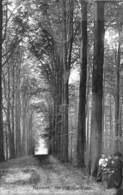 Tervueren - Une Allée Dans Le Parc (animation, Edit. Decock, 1909) - Tervuren