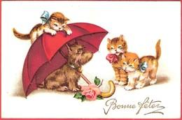 3 Chats Et Chien  - Cats Dog -katzen Hund- Poesjes En  Hond - Katten