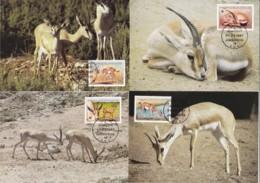 1987, Lybien, 1753/56,  WWF. Weltweiter Naturschutz: Gazelle,  Global Nature Conservation: Gazelle, Maxi Cards - Libyen