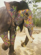 COLORFUL FISPLAY - ELEPHANTINE GRACE - India
