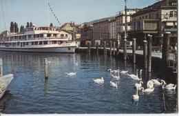 Rorschach Hafen Port Haven - Hotel Ship  Karlsruhe - Swans  Zwanen - - SG St. Gall