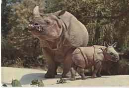 Basel Zoo - Indische Pantser Neushoorn Met Baby - Panzernashorn - BL Bâle-Campagne