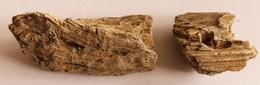 Bois Fossile Silicifié Vallée D'eure - Fossielen