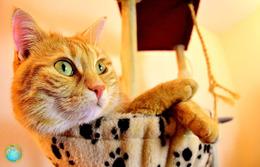 1 Magnet Neuf Theme Animaux Chat - Animali & Fauna
