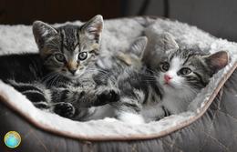 1 Magnet Neuf Theme Animaux Chat - Tierwelt & Fauna