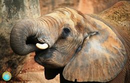1 Magnet Neuf Theme Animaux éléphant - Animaux & Faune