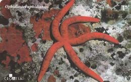 CROACIA. FAUNA MARINA. Ophidiaster Ophidianus. TK 20/01. (031). - Tarjetas Telefónicas