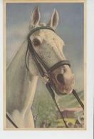 CHEVAUX - HORSES - Portrait Cheval - Paarden