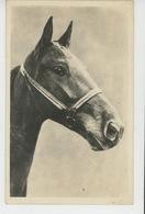 CHEVAUX - HORSES - Portrait Cheval - AMAG 638 - Paarden