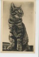 CHATS - CAT - Jolie Carte Fantaisie Chat Tigré - Katten