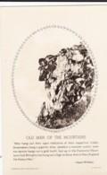 AS82 Old Man Of The Mountains, Franconia Notch, White Mts. N.H. - RPPC - White Mountains