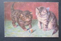 Cat Zwarte Kat Chat Noir Stocks Stacks - Katten