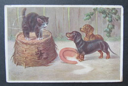 Cat Zwarte Kat Chat Noir Stocks Stacks Dog Hond Chien - Katten