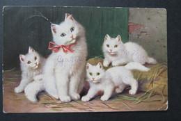 Cat Zwarte Kat Chat Noir White - Katten
