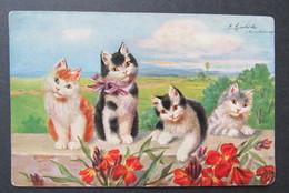 Cat Zwarte Kat Chat Noir - Katten