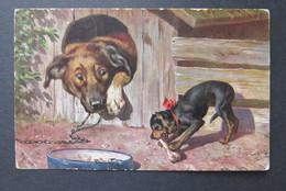 Hond Dog Chien - Honden