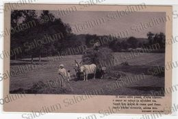 1912 - Agricoltura Carro Buoi Animata Frase Versi Poesia Giovanni Bertacchi - Landwirtschaft