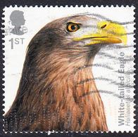 Birds Of Prey (2019) - White-tailed Eagle (Haliaeetus Albicilla) 1st SG4200 - 1952-.... (Elizabeth II)