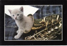 Un Chat Dans Un Saxophone - Katten