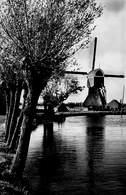 Windmolen Molen Windmill Moulin à Vent  Bleskensgraaf Zuid Holland  Echte Fotokaart    L 618 - Windmolens
