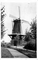 Windmolen Molen Windmill Moulin à Vent  Hulst  Molen Op De Wallen      L 631 - Windmolens