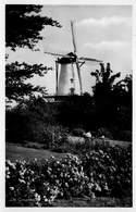 Windmolen Molen Windmill Moulin à Vent  De Graanhalm Haamstede  Echte Fotokaart   L 645 - Windmolens
