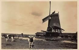 Windmolen Molen Windmill Moulin à Vent  Langs De Zaan   Paltrokmolen De Hald Jozua Zaandam Echte Fotokaart    L 660 - Windmolens