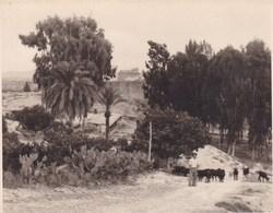 ESPAGNE CUEVAS DEL ALMANZORA 1949  Photo Amateur Format Environ 7,5 X 5,5 Cm - Lieux