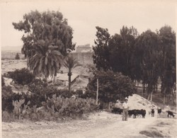 ESPAGNE CUEVAS DEL ALMANZORA 1949  Photo Amateur Format Environ 7,5 X 5,5 Cm - Plaatsen