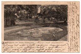 SINGAPORE BOT.GARDEN, VICTORIA REGIA / CIRCULATED TO ITALY (QUINZANO D'OGLIO-BRESCIA) 1903 - Singapore