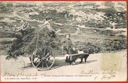 SAINT-PIERRE MIQUELON -cpa  Voyagée 1905- Autre Attelage St-Pierrais-Le Terreneuve Scans Recto Verso- Paypal Sans Frais - Saint-Pierre-et-Miquelon
