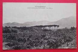 66 St Genis Des Fontaines Les Albères RARE Cpa Série Le Roussillon éditeur Marie Bernard Dos Scanné - Autres Communes