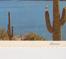 Arizona -saguaro Lake - Stati Uniti