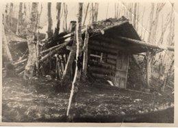 Holzhütte Im Birkenwald Ca 1930 Leider Unbekannt - Fotografie