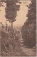 28531g  DREVE -  Beersel - Beersel