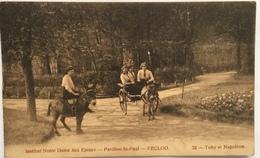 (886) Eecloo - Institut Notre-Dame Aux Epines - Pavillon St.-Paul - Toby Et Napoléon - De Ezeltjes. - Eeklo